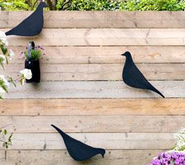 vogels op schutting