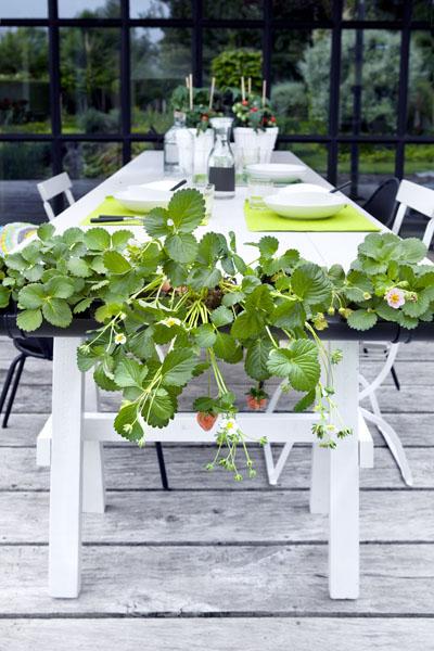 plantenbak tafel aardbeien wit rood groen