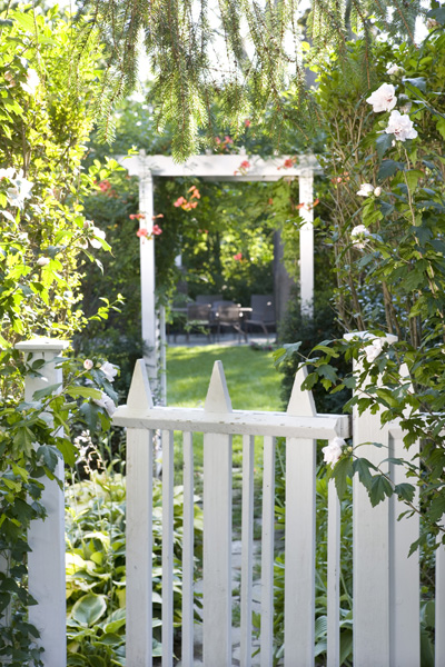 Witte bloementuin - Bedekking voor pergola ...