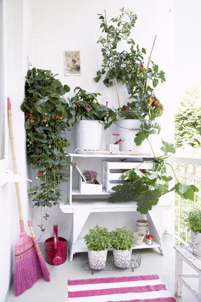Tomatenplant: Wat & Hoe