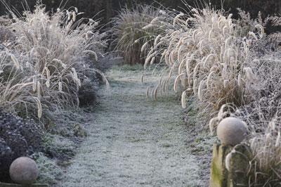 Siergrassen: vol effect in de wintertuin