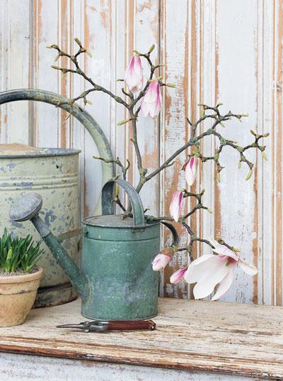 Magnoliatak op vaas