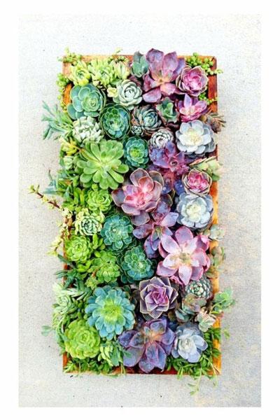 Vetplanten aan de wand