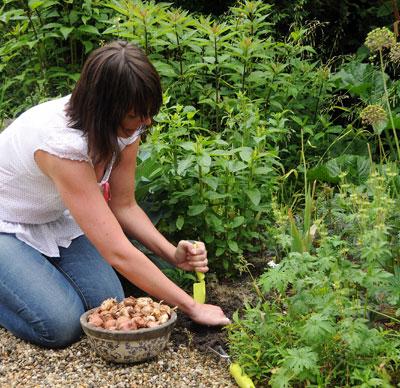 Zomerbollen planten