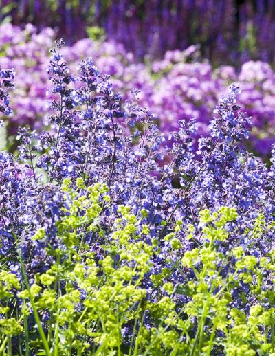 paarse en gele bloemen