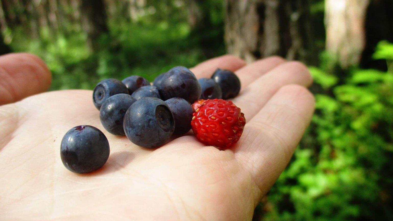 Zacht fruit plukken
