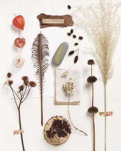 Maak een herfstmoodboard met vondsten uit de tuin