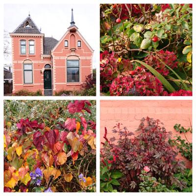 tuin in herfstkleuren