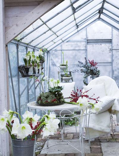 Kerstsfeer met sneeuwwitte amaryllis