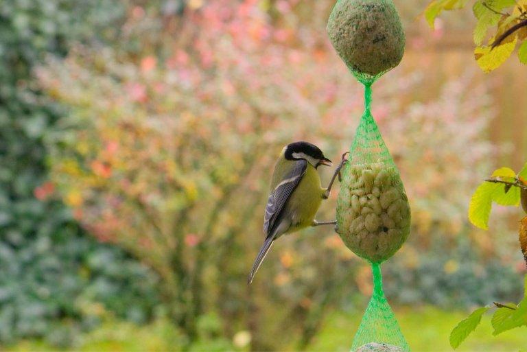 Driesterrenmenu voor tuinvogels