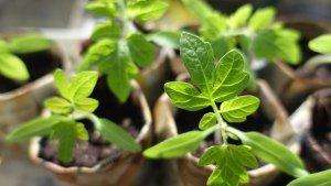 Voorzaaien in de vensterbank – 8 tips