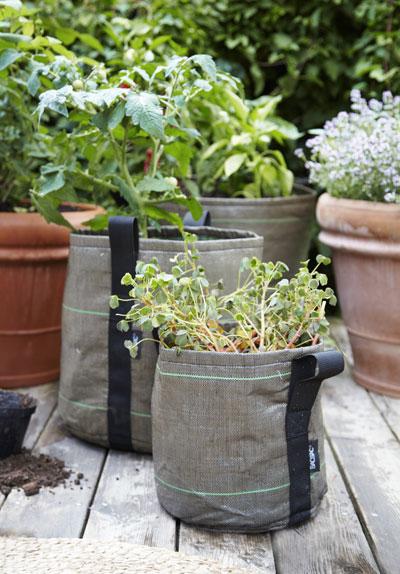 moestuin in potten en zakken