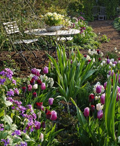 Tips voor tulpen en andere bloembollen in de tuin