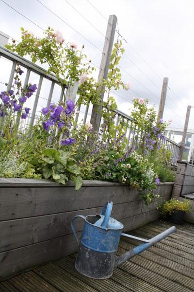 webhoppen voor de tuin, bloeiend dakhek