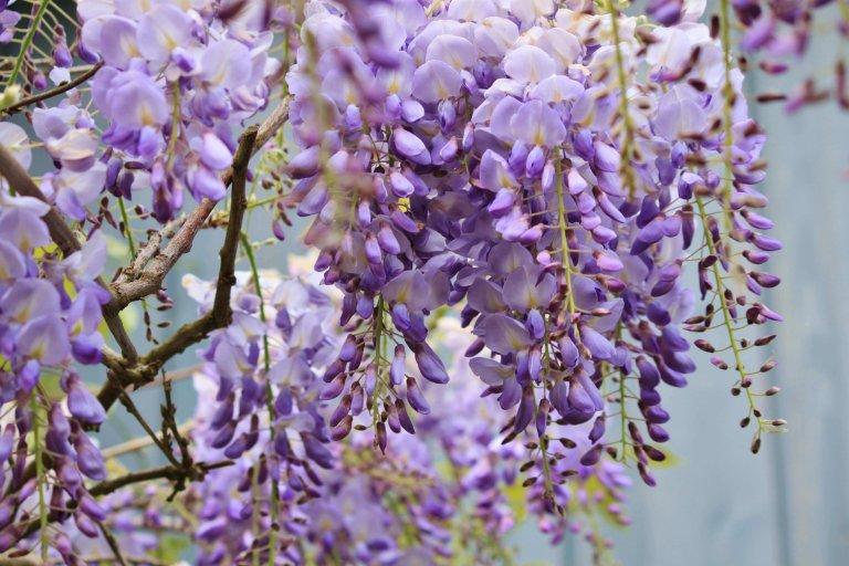 Top 6 klimplanten En Tips Om Ze Hogerop Te Helpen