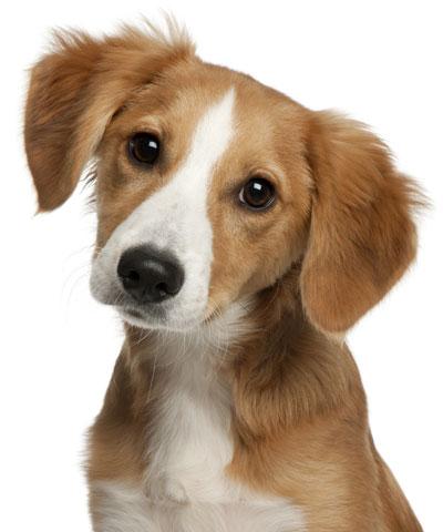 7 tips om je tuin hondvriendelijk te maken