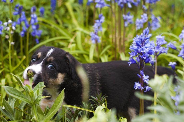 Hond Vriendelijke Tuin : 7 tips om je tuin hondvriendelijk te maken