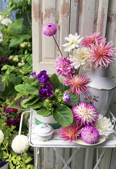 Zomerbollen in bloei: dahlia's