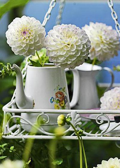Zomerbollen in bloei: pompondahlia's in theepot-vaas