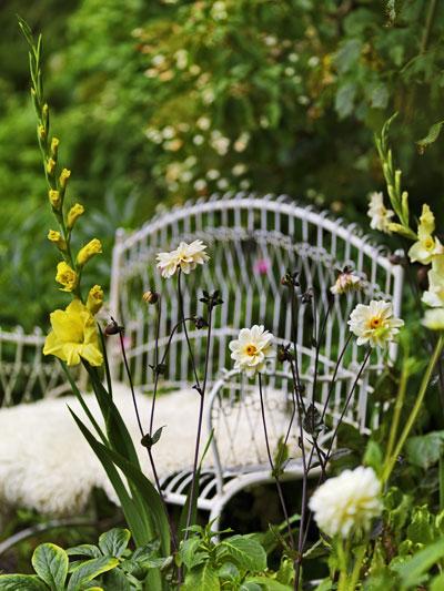 Zomerbollen in bloei: witte dahlia's en gele gladiolen