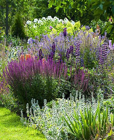 Schilderen met planten, paarse border
