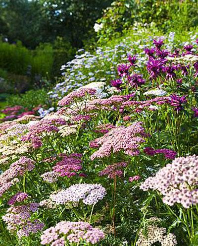 Schilderen met planten, border in zomerpastellen