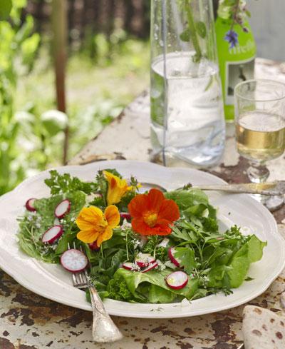 moestuin, salade met radijs en Oost-Indische kers op bord