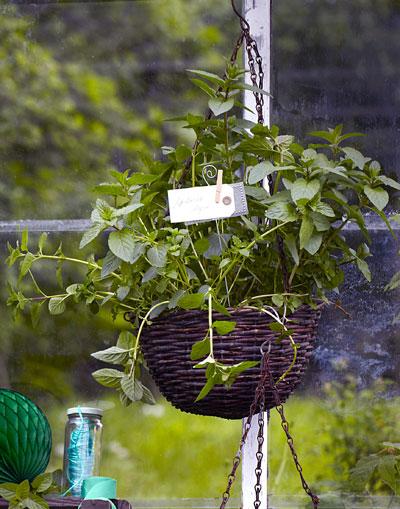 Munt Kweken: Alles Wat Je Wil Weten