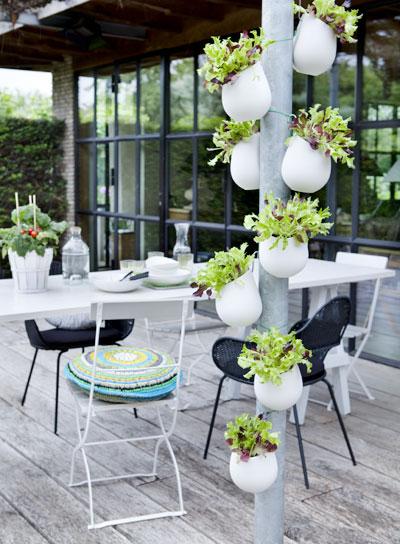 vakantiegevoel in eigen tuin, sla plukken op het terras