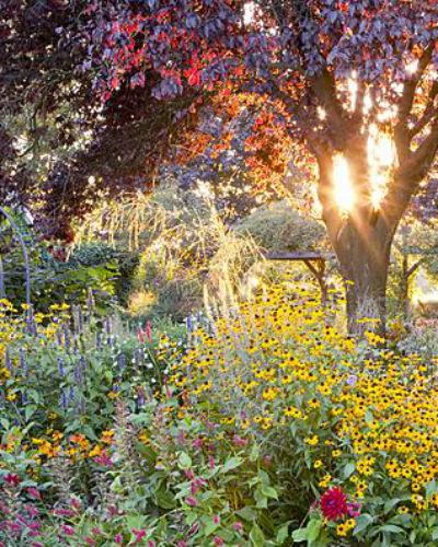 kleurrijke herfsttuin, op de achtergrond de zon die door de bomen schijnt