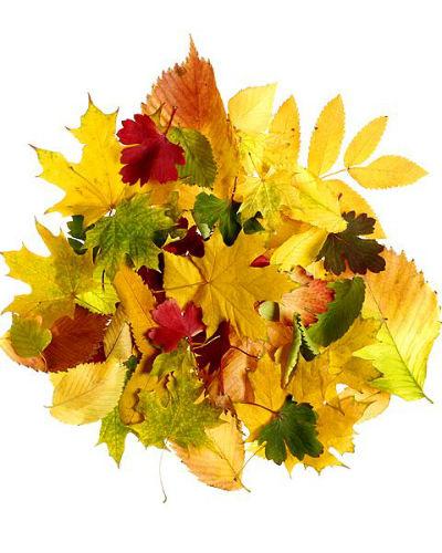 Decoratie-ideeën met herfstblad