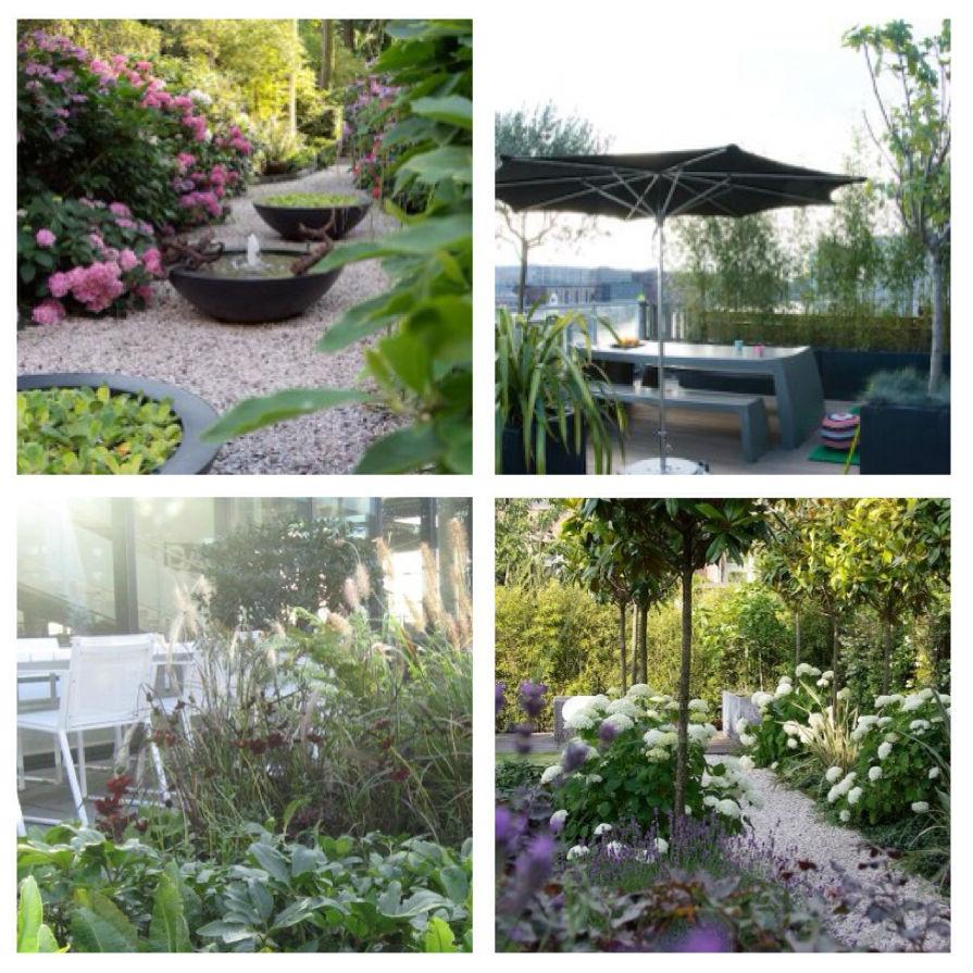 webwinkelen voor de tuin, tuinontwerpen van Erwin Stam