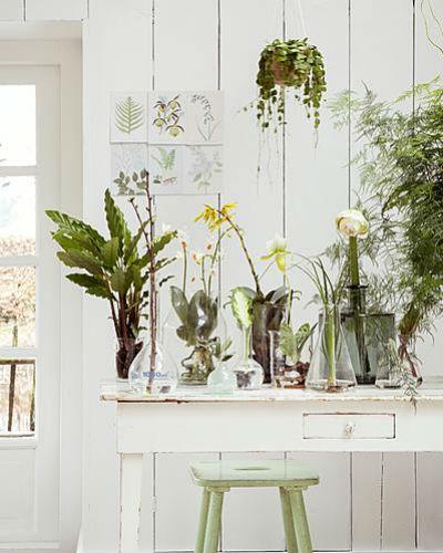 tuintje in huis: kamerplanten op tafel