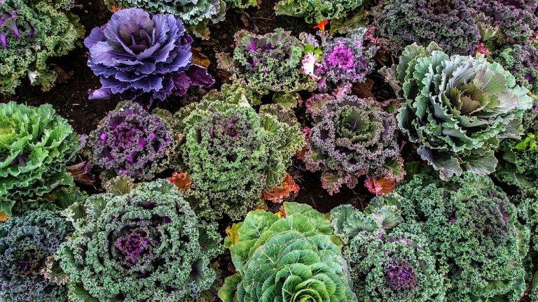 Wintergroenten uit eigen tuin