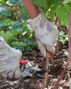 snoeihout recyclen, handschoenen en snoeischaar