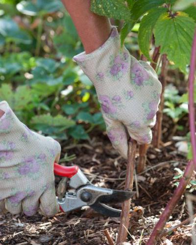 6x snoeihout en herfstblad recyclen