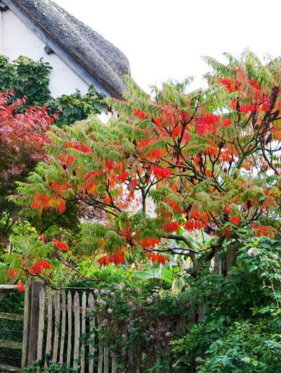 Bomen voor een kleine tuin