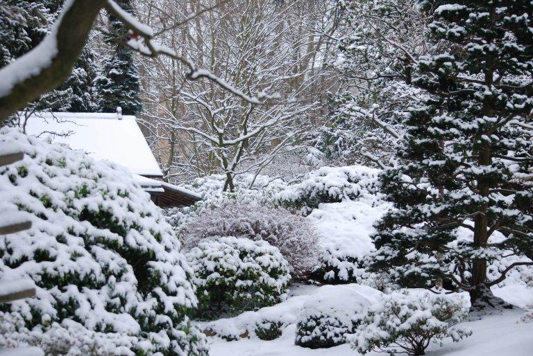 Tips voor de mooiste sneeuwtuin