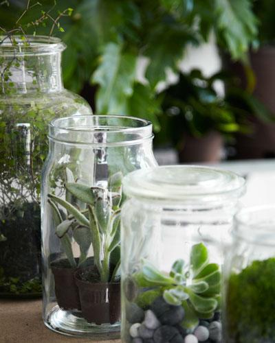 nieuw groen in huis: kamerplanten in glazen weckpotten