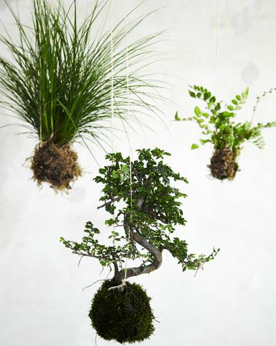 Nieuw groen in huis: zwevende plantenbollen
