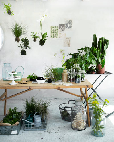 Nieuw groen in huis: planten op tafel en zwevend erboven