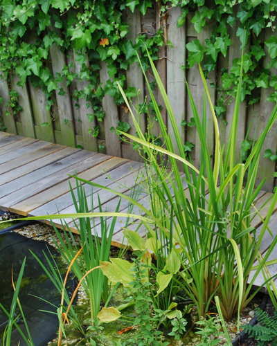 duurzame tuin, waterplanten, op de achtergrond houten vlonder