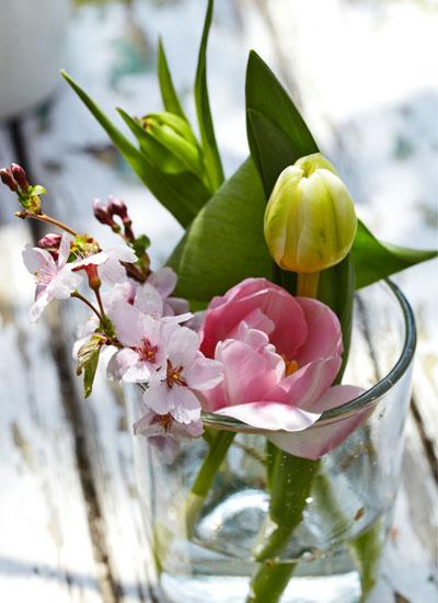 Kersenbloesem, takje met tulpen in glazen vaas