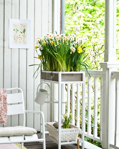 bloeiende bollen, narcissen, op balkon