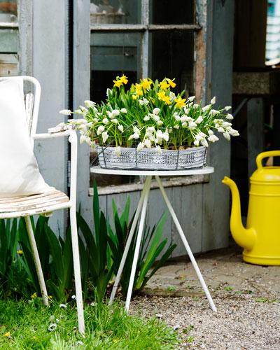 bloeiende bollen, gele narcissen en witte druifjes, op wit driepoots bijzettafel, links stoel met kussens, rechts knalgele plastic gieter