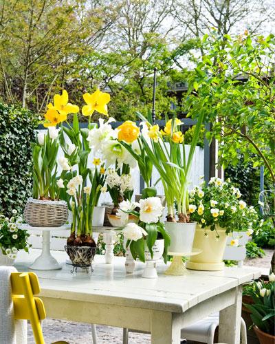 bloeiende bollen, een mix van verschillende soorten, in wit en geel, uitgestald op wit houten tafel
