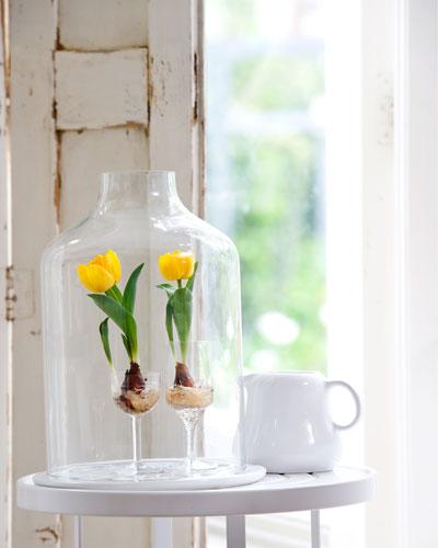 bloeiende bollen, gele tulpen in wijnglas onder stolp
