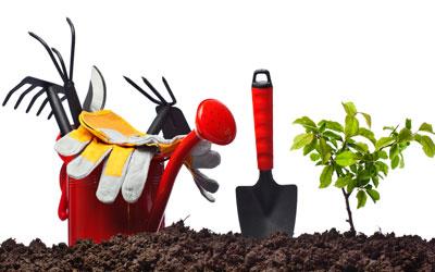maarttuinklusjes, emmertje, gereedschap, handschoenen, schepje en plant in aarde