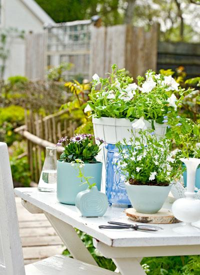 update lenteterras: eenjarige bloeiende planten in potten op de tuintafel