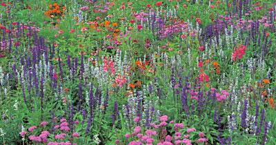 patchwork border, Perzisch bloementapijt